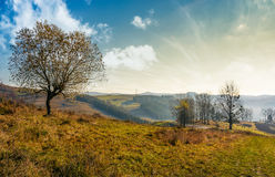 Trees on hillside on beautiful autumn morning. In mountains Royalty Free Stock Photography