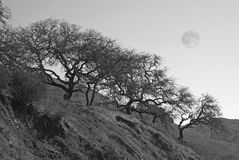 Trees on Hillside with Full Moon Stock Photos