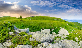 Trees on hillside among huge boulders at sunrise. Composite landscape with few trees among white sharp boulders in the grass on hillside near mountain top in Royalty Free Stock Image
