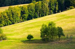 Trees on a hillside meadow. Wonderful nature scenery in early autumn Stock Photo