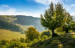 Trees on hillside in mountainous countryside. Lovely early autumn landscape in fine weather Royalty Free Stock Photography