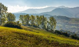 Trees on hillside in mountainous countryside. Lovely early autumn landscape in fine weather Royalty Free Stock Photo
