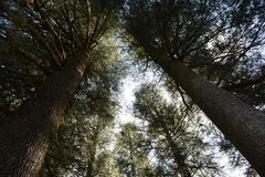 Trees on hilly valleys Royalty Free Stock Images