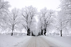 Trees in hoar frost Royalty Free Stock Photography