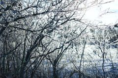 Trees in hoarfrost Royalty Free Stock Image