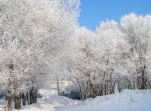 Trees in hoarfrost Stock Image