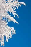 Trees in hoarfrost Royalty Free Stock Photo