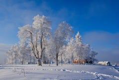 Trees in hoarfrost. Winter in Russia. Trees in hoarfrost Stock Photos
