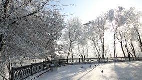 Trees in the hoarfrost against the blue sky. snow falls. Snow-covered trees in the park against the blue sky stock footage