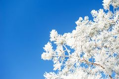 Trees in hoarfrost against the blue sky. Selective focus. Beautiful winter landscape Royalty Free Stock Images