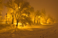 Trees in hoarfrost Stock Photography