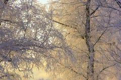 Trees in hoarfrost close Stock Photo