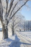 Trees with hoarfrost on the roadside Royalty Free Stock Photography