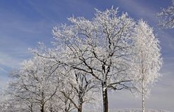 Trees with hoarfrost in winter, Germany Royalty Free Stock Photography