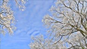 Trees in hoarfrost stock video