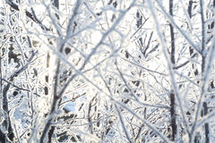 Trees in Hoarfrost Stock Images