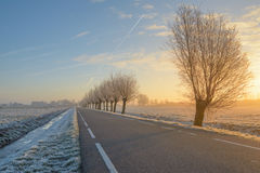 Trees with hoarfrost. A wintery sunrise in the Boterhuispolder of Leiderdorp, the Netherlands. The trees are covered with hoarfrost Royalty Free Stock Photos