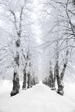 Trees in hoars frost Royalty Free Stock Photos