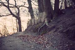 Trees in Hoge Veluwe Stock Photography