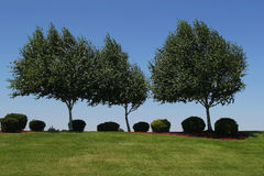 Trees on horizon. With bushes and mowed lawn Royalty Free Stock Images