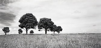 Trees on Horizon Royalty Free Stock Photos