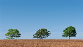 Trees On The Horizon In The Sun. Three trees in a row in freshly ploughed field stock footage