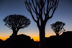 Trees on the horizon at sunset. Silhouette of trees on the horizon at sunset. photo taken in Namibia Stock Image