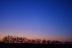Trees on Horizon at Sunset ver1. Line of trees on the horizon at sunset with a clear sky Stock Photo