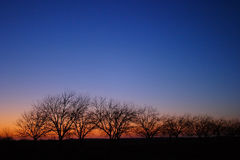 Trees on Horizon at Sunset ver2. Line of trees on the horizon at sunset with a clear sky Stock Image