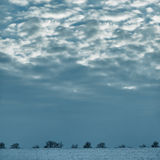Trees on the horizon in the winter evening, minimalism Stock Photos