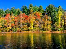 Trees by housatonic river in autumn Royalty Free Stock Images