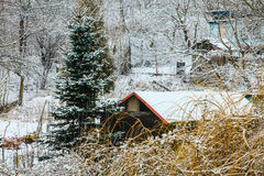 Trees and houses covered by snow. Winter scenery Royalty Free Stock Images
