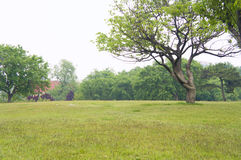 Trees. The huge beautiful nature environment in trees Stock Photos
