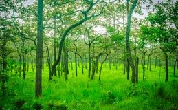 Trees i äng Arkivbilder