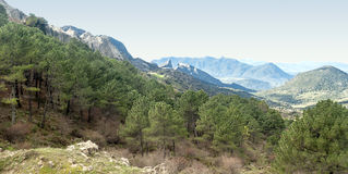 Trees i bergen Arkivfoton