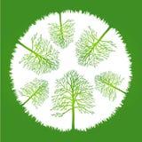 Trees i cirkel Stock Illustrationer