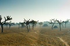Trees i den indiska öknen arkivbilder
