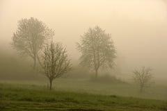 Trees i dimma Arkivfoto