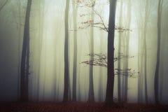 Trees i dimman Arkivfoto
