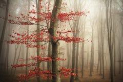 Trees i dimman royaltyfri foto