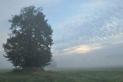 Trees i dimman Variabelt väder Swit äng Royaltyfri Fotografi