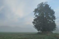 Trees i dimman Variabelt väder Swit äng Morgon Arkivfoton