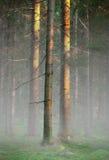 Trees i dimmig kall morgon Arkivbild