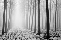 Trees i en dimmig dag Arkivfoto