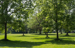 Trees i en parkera royaltyfri foto