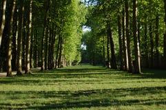Trees i en parkera Royaltyfria Foton