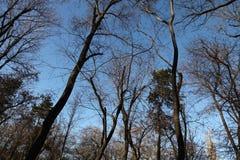 Trees i en parkera Royaltyfri Bild