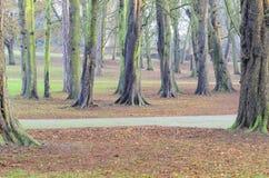 Trees i en parkera Arkivbilder