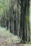 Trees i en rad Arkivfoto
