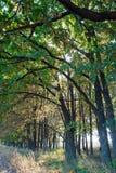 Trees i en rad Fotografering för Bildbyråer